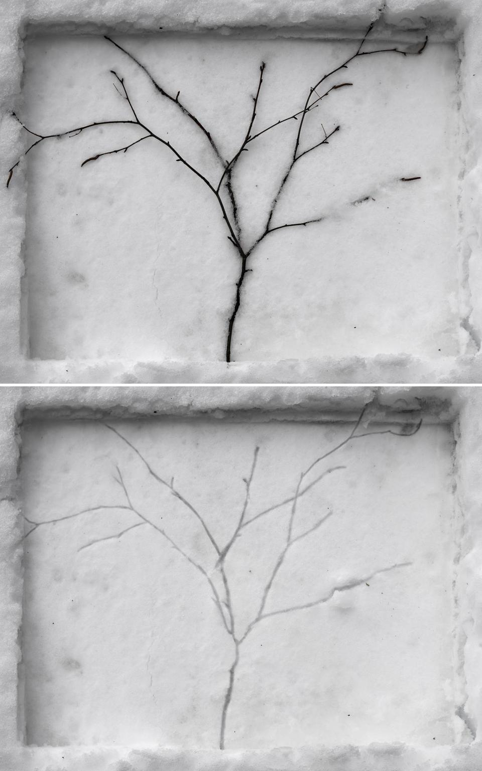 """Tree Branch Pressed in Snow."""